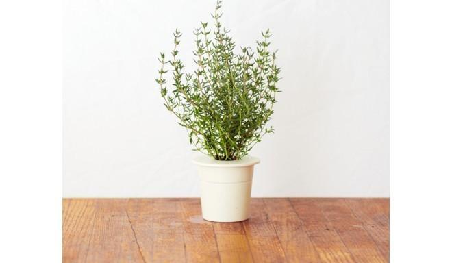 Click & Grow Smart Herb Garden кассета, Тимьян (3 шт)