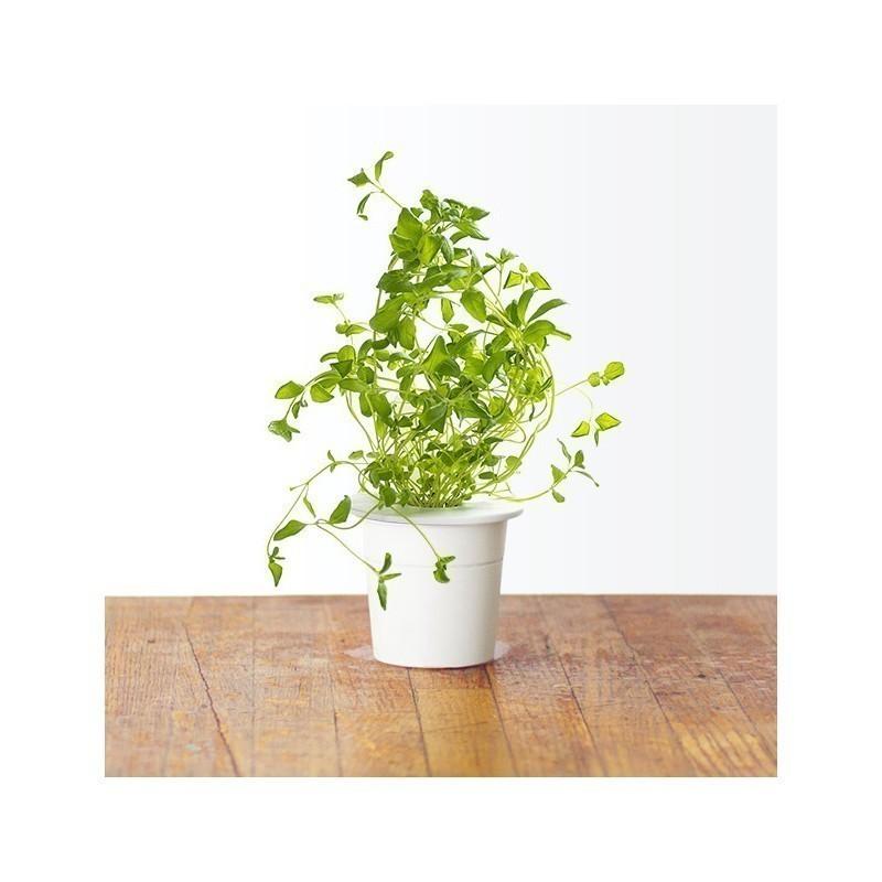 Click & Grow Smart Herb Garden refill Pune 3tk