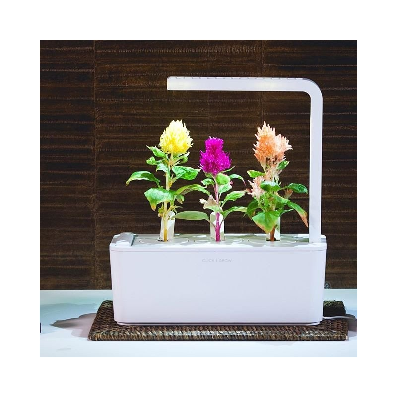 Click & Grow Smart Herb Garden refill Mätashari 3tk