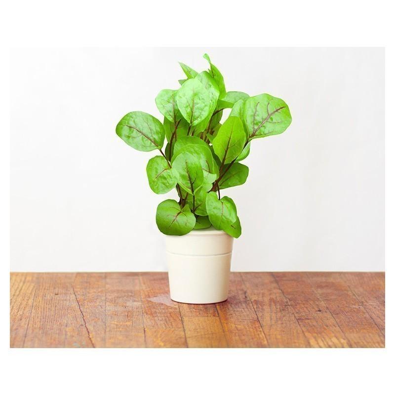 Click & Grow Smart Herb Garden refill Verev oblikas 3tk