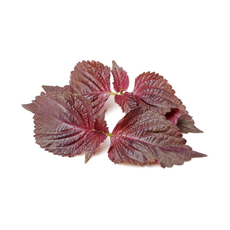 Click Amp Grow Smart Herb Garden Refill Red Shiso 3 Pack