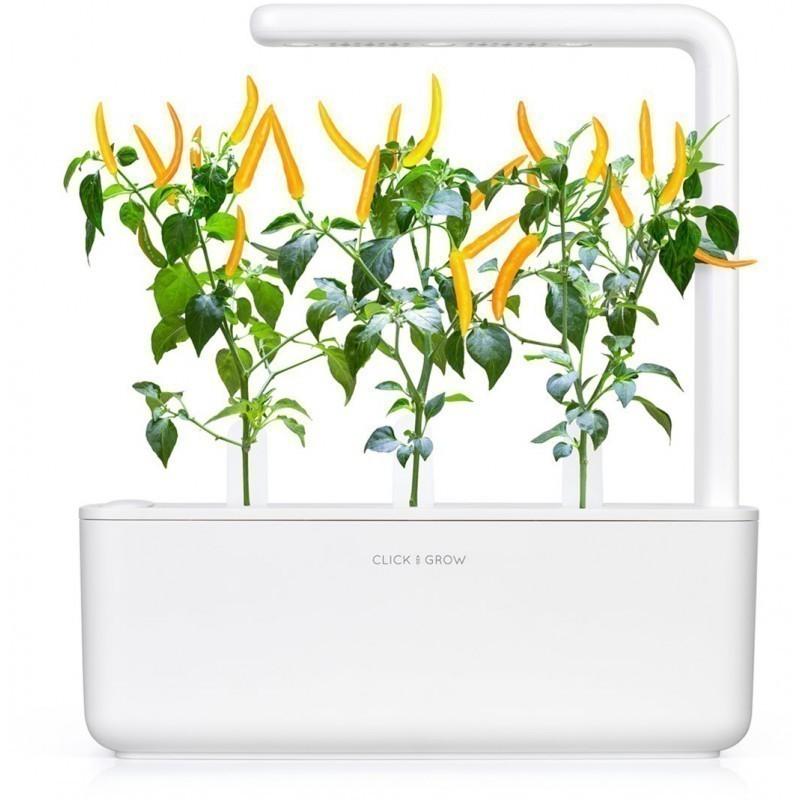 Click & Grow Smart refill Kollane tšilli 3tk