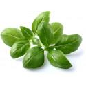 Click & Grow Smart Garden refill Basiilik 3tk