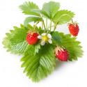 Click & Grow Smart Garden refill Metsmaasikas 3tk