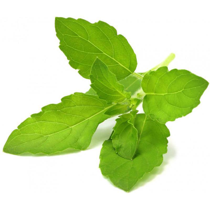 Click & Grow Smart Garden refill Püha basiilik 3tk