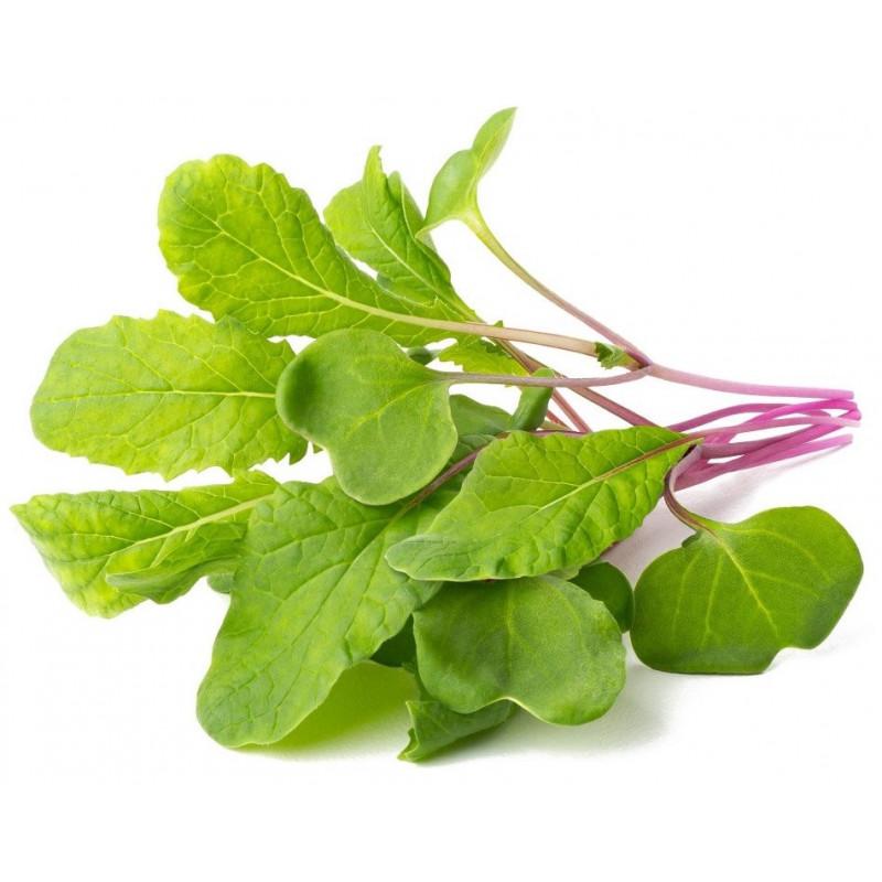 Click & Grow Smart Refill Lehtredis 3tk