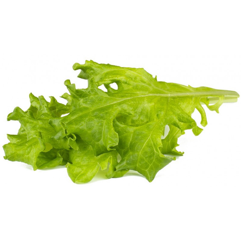 Click & Grow Smart Refill Tammelehe salat 3tk