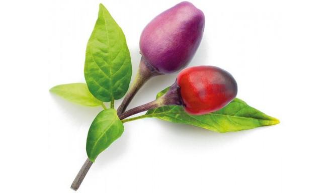 Click & Grow Smart Garden refill Фиолетовый чили перец 3 штуки