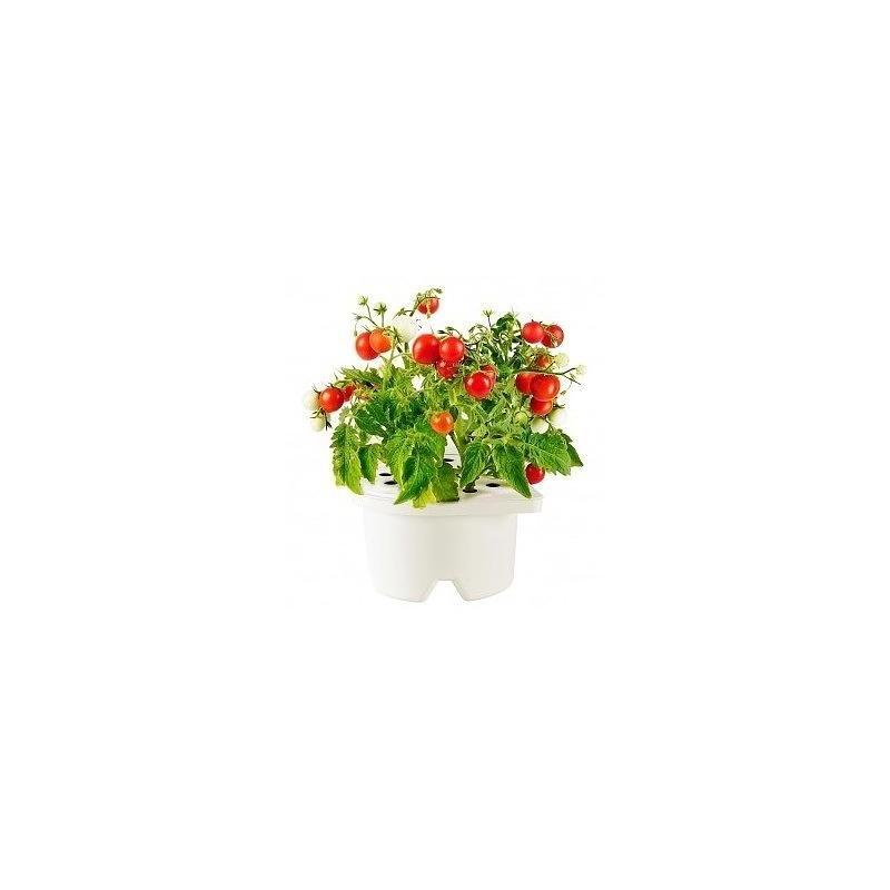 Click & Grow Smartpot refill Minitomat