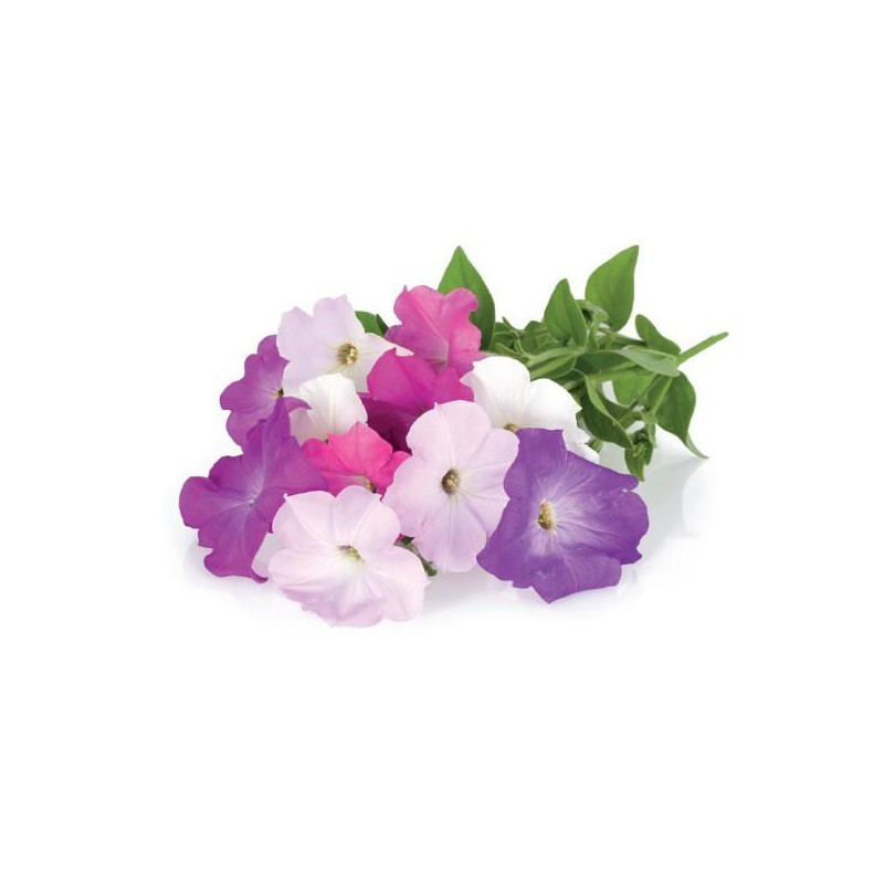 Click & Grow Smart Garden refill Petuunia 3tk