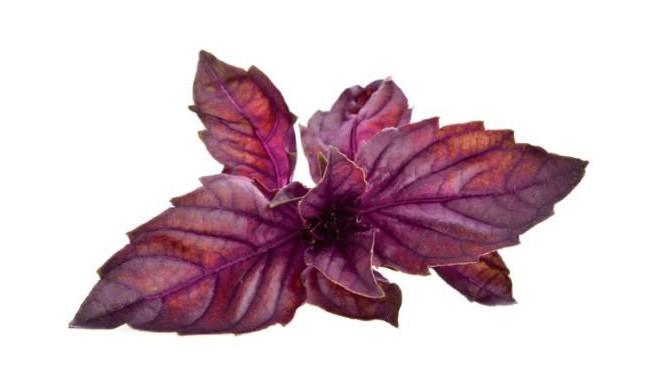 Click & Grow Smart Garden refill Punane basiilik 3tk