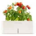 Click & Grow Starter Kit мини томат