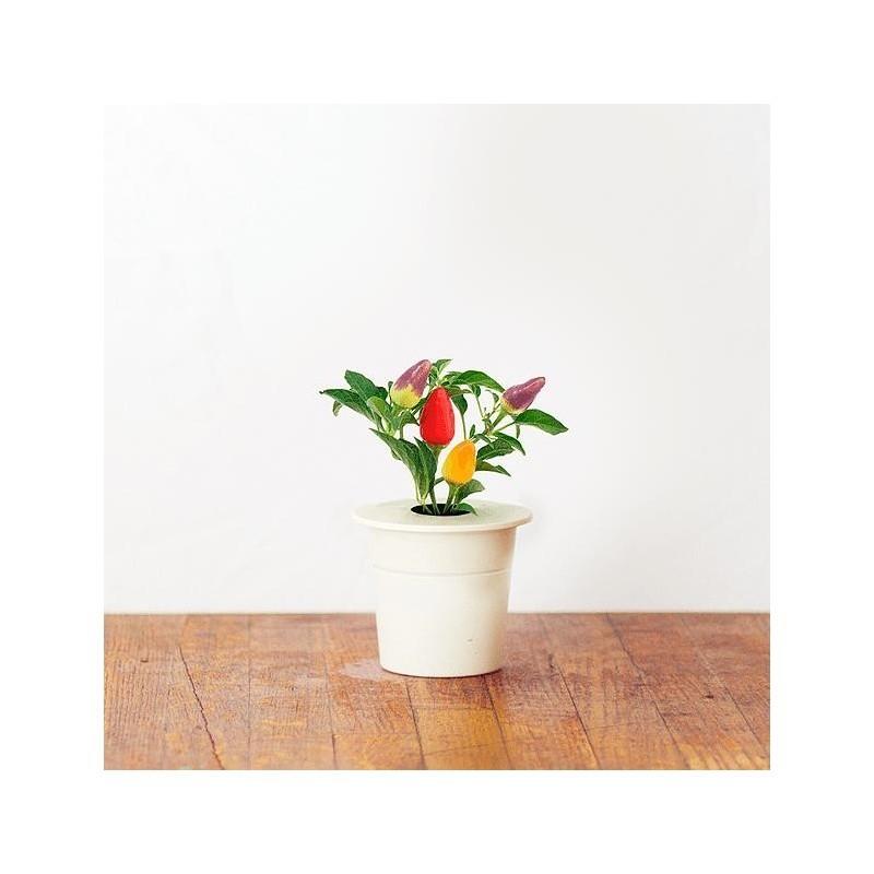 Click & Grow Smart Herb Garden refill Chilli Pepper 3 pcs